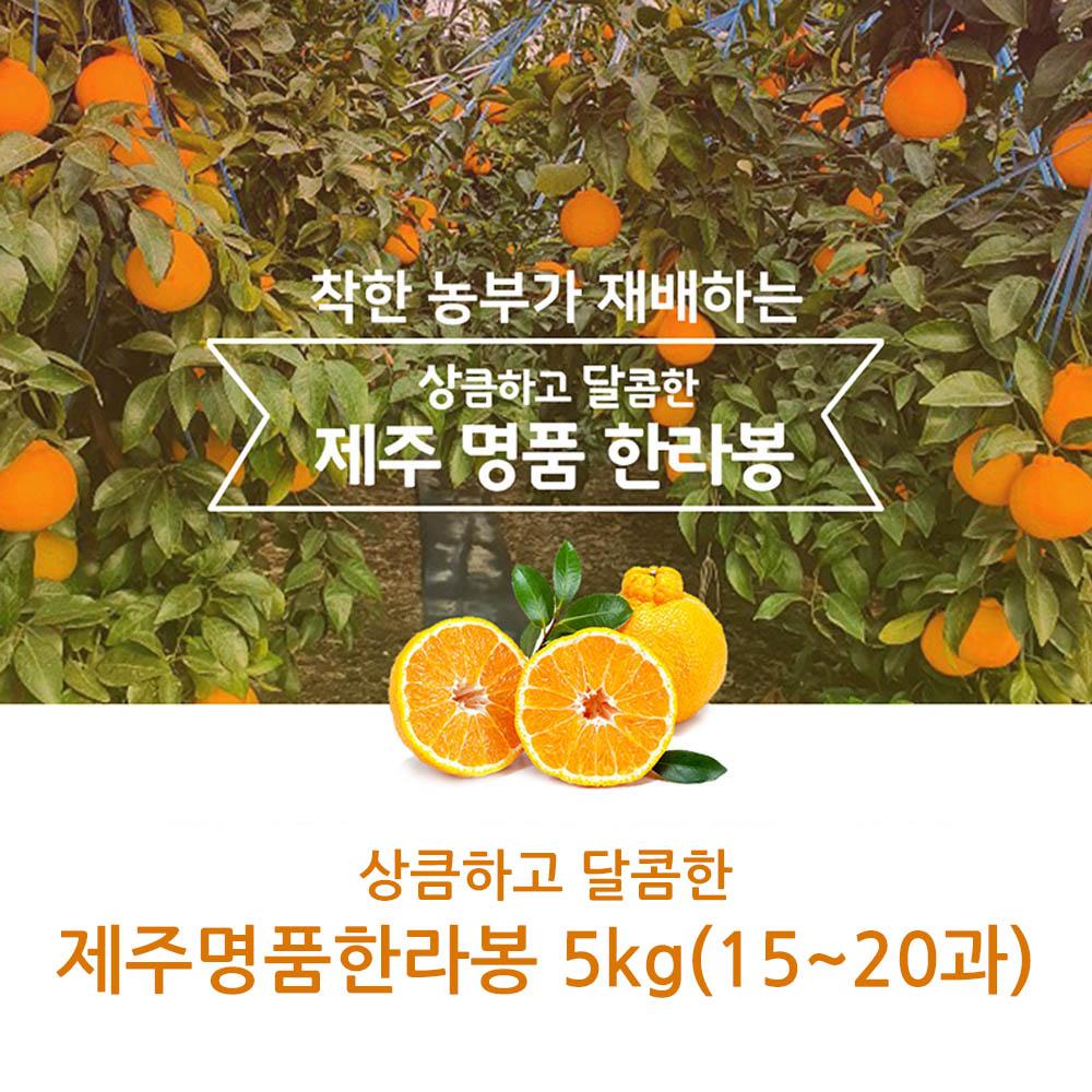 제주직송 상큼하고 달콤한 제주명품한라봉 5kg(15~20과)