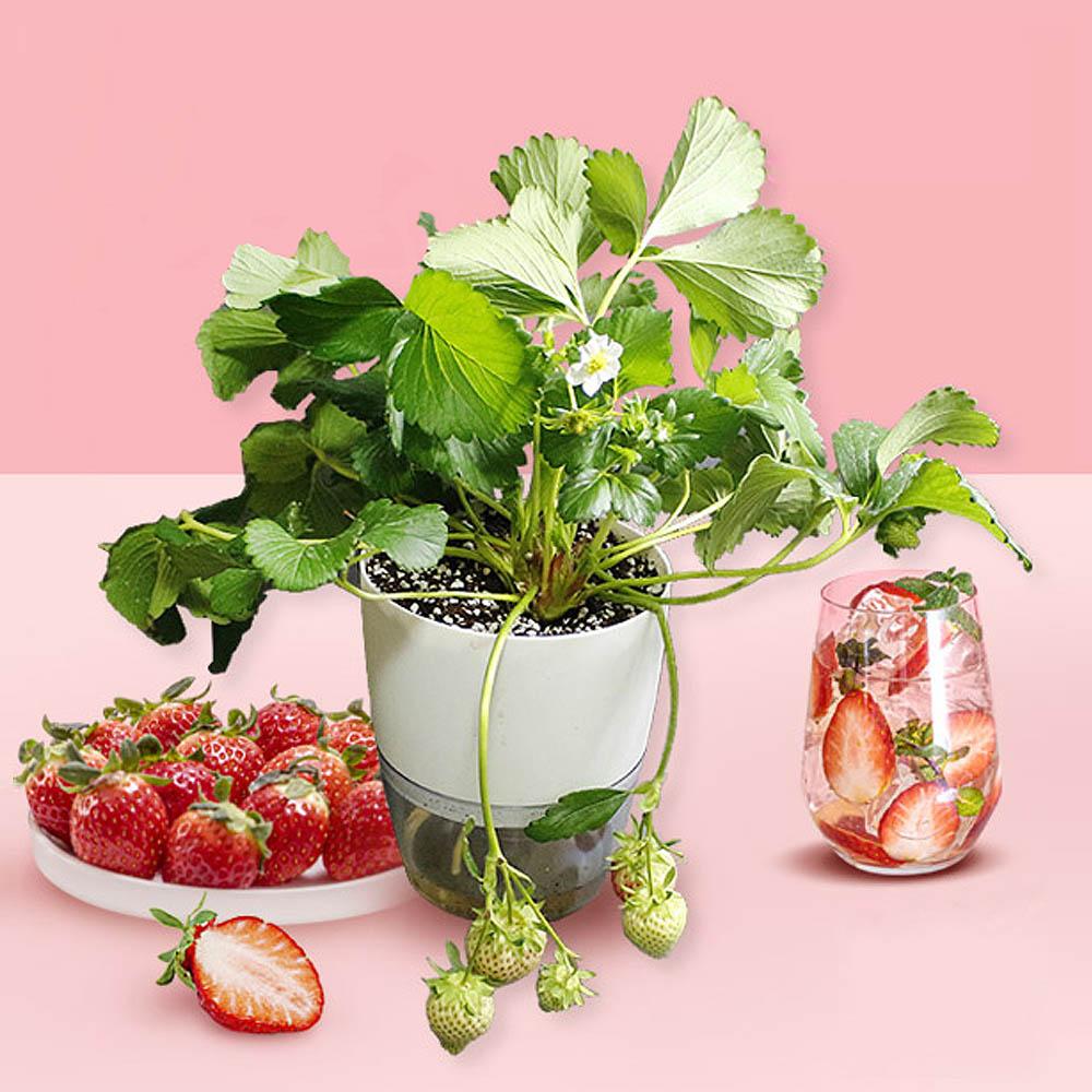 농순이 집에서 딸기키우기 풀구성